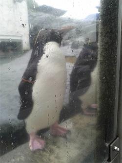 雨の動物園