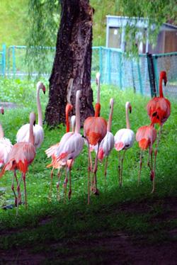 夕暮れの旭山動物園撮影教室