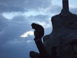 夕暮れの動物園撮影教室のお手伝いをしました-12.JPG