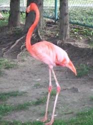 夕暮れの動物園撮影教室のお手伝いをしました-6.jpg