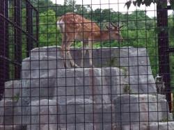 夕暮れの動物園撮影教室のお手伝いをしました-8.jpg