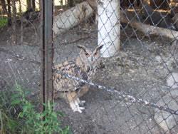 旭山動物園くらぶ事務局の島津です