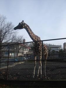 旭山動物園わくわくゲーム大会