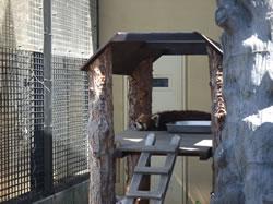 旭山動物園開園式