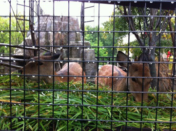 雨の日こそ?動物園へ♪
