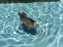 旭山動物園夏季開園です