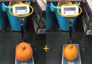 かぼちゃ重量